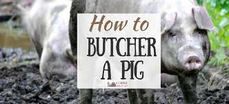 How To Build A Pig Barn How To Butcher A Pig At Home