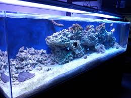 Reef Aquarium Lighting Diy 4x 100w Multichip Led Fixture The Reef Tank