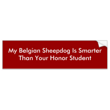 belgian sheepdog artwork belgian sheepdog gifts on zazzle