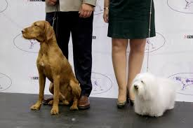 2 new breeds allowed to compete in westminster kennel club