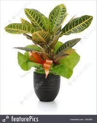 picture of indoor plants