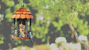 how to prepare your wild birds for the winter the home depot