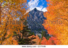 north lake fall color inyo national forest eastern sierra