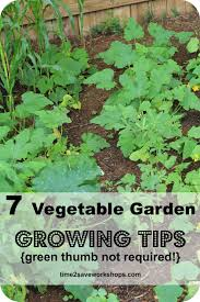 green thumb not required 7 super vegetable garden growing tips