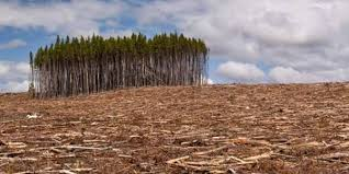 Trees Worldwide Global Warming Tree Search Utopia Global