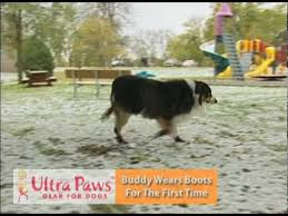 first time in ultra paws dog boots youtube