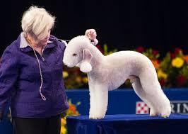 bedlington terrier guard dog scissors shears for cutting your dog u0027s hair dogs