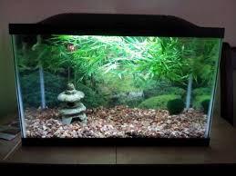 asian fish aquarium decor aquarium design ideas