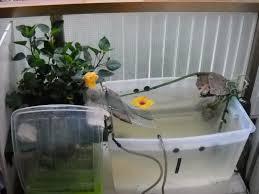 vasche acquario acquario interno vs vasca esterna sanguefreddo net