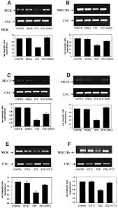 oxidative stress impairs skeletal muscle repair in diabetic rats
