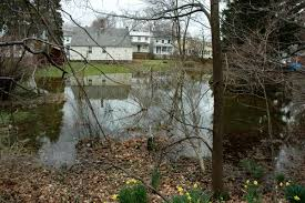homeowners can reduce yard runoff belmont citizens forum pictures