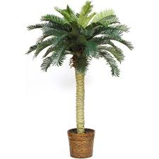 sago palm silk tree 4 foot free shipping today overstock