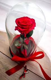 rose in glass long lasting rose in a flask rose in a glass dome stabilized a