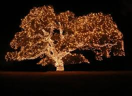 buying guides how to wrap a tree in lights 1 choose your