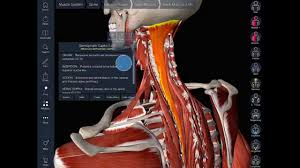 essential anatomy 3 apk human anatomy free essential anatomy 3d exle best detail