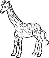 simple giraffe outline print color pictures variety