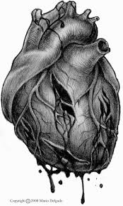 Anatomy Of The Heart And Its Functions 1595 Best Anatomical Heart Images On Pinterest Anatomical Heart