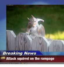 Squirrel Meme - breaking news live attack squirrel on the rage news meme on me me