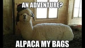 Stupid Animal Memes - stupid puns