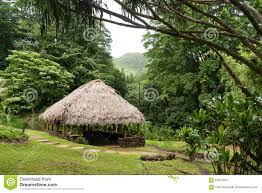 Hawaii forest images Tropical hut structure hawaii forest straw plant roof stock image jpg