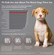 here u0027s why you see so many pit bulls in shelters barkpost