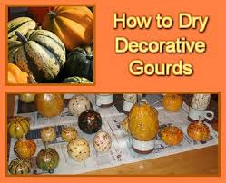 25 unique decorative gourds ideas on gourd crafts