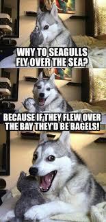Cheesy Memes - cheesy memes pinterest memes pun dog and worst puns