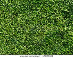 shrub stock images royalty free images vectors