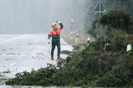 a forestry worker deals with fallen trees or a road which had to