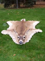 Whitetail Deer Home Decor by Deer Skin Rug Paul Is Dying For One For A Hunting Room Making