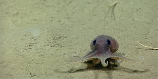 these itty bitty octopi have 8 arms infinite cuteness huffpost