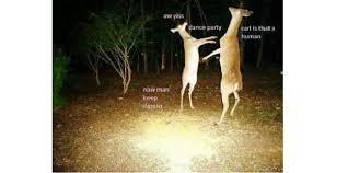 Deer Hunting Memes - 10 funny hunting memes