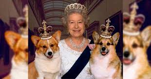 queen elizabeth dog queen elizabeth receives news regarding beloved corgi