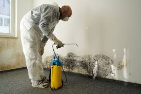 Cost To Remove Mold In Basement - mold remediation cost estimates and prices at fixr
