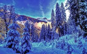forests nature cold frosted mountains froest winter forest snow