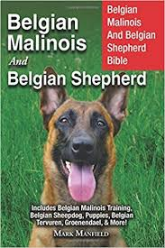 belgian shepherd or malinois belgian malinois and belgian shepherd belgian malinois and