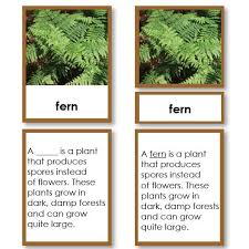 Part Of Flowers - parts of a fern classified five part cards u2013 montessori 123