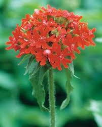 Hummingbird Flowers Hummingbird Favorites Fine Gardening