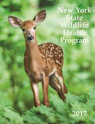 New York wildlife images New york state wildlife health program cornell wildlife health lab jpg