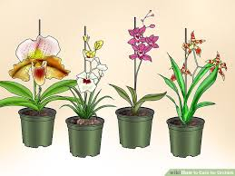 Orchid Cut Flowers - how to care for orchids with pictures wikihow