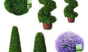 plant artificial topiary plants shining artificial topiary trees