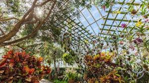Botanical Garden Orchid Show Orchid Show 2018 In Nyc Everything You Need To