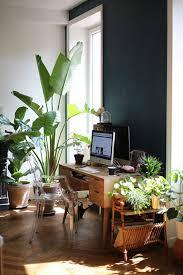 plants that grow in dark rooms green plants against dark wall sfgirlbybay workspaces