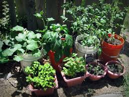 herb and vegetable container gardening pavillion home designs