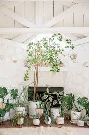 127 best gardening 101 images on pinterest plants indoor plants