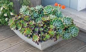 sukkulenten pflanzen pflege und tipps mein schöner garten