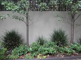 183 best gardens fences privacy screens hedges and climbers