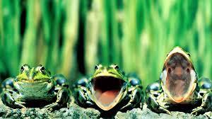 33 units of frog wallpaper