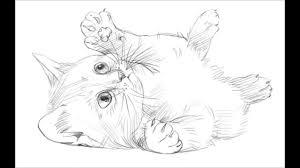 draw kitty cat
