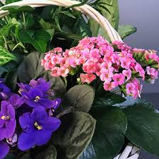 plant delivery shop plants for delivery today to baltimore and surrounding area